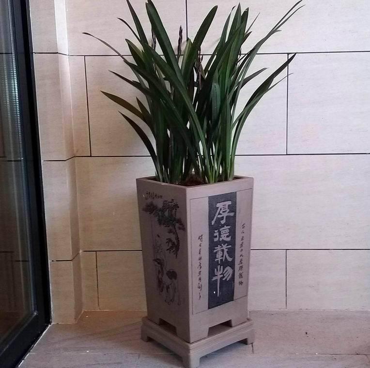 Cymbidium Ensifolium Orchid Orchid Cymbidium Sinense Cymbidium Ensifolium Zhangzhou Xiangcheng