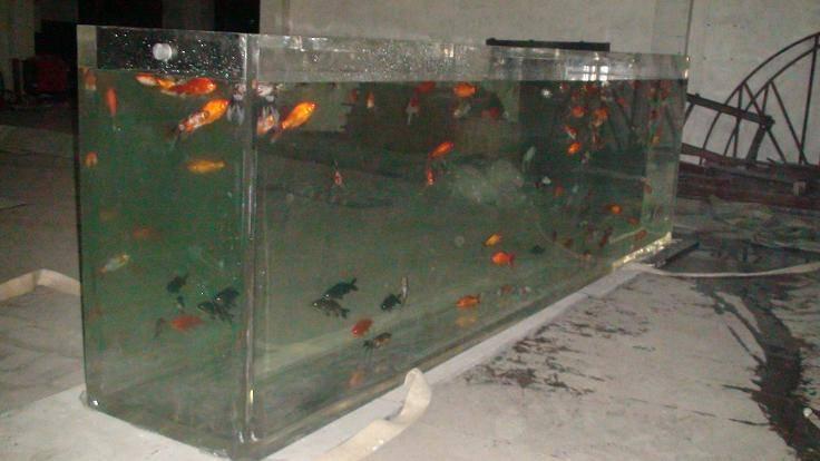 Acrylic rectangular fish tank suzhou xingcheng aquarium - Rectangular fish tank sizes ...
